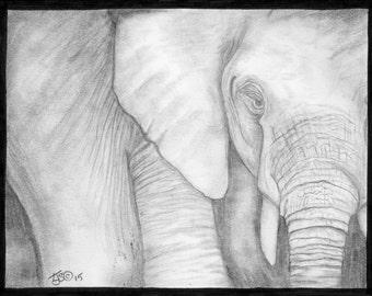 Elephant in grey