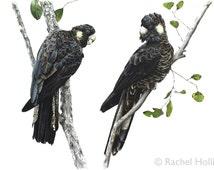 Bird Print - Yellow-tailed Black Cockatoos - Bird Art