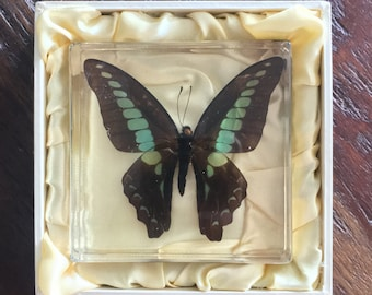 Blue Triangle Butterfly in Lucite