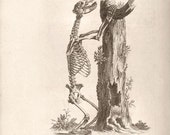 Bear Skeleton by William Cheselden 1733 reproduction engraving anatomical print