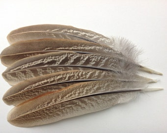 """Natural Color Pheasant Feathers - Crafting feathers - Craft Supplies - 7""""inches feather - 1501"""