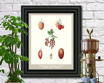 Berries Botanical Print Vintage Berries Illustration Kitchen Wall Art Poster  0458