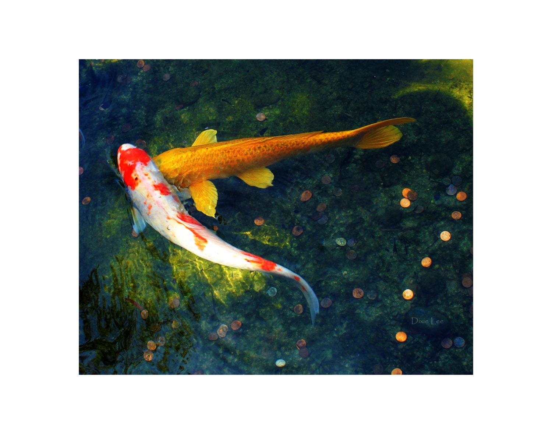 Koi photography koi fish photo koi photo koi print koi for Koi fish home decor