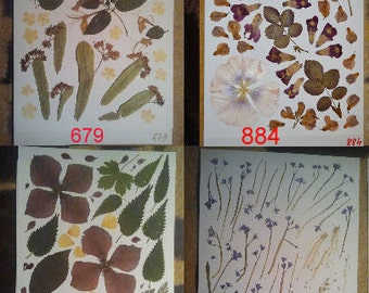 Wedding table decor: Pressed leaves, dried leaves, scrap booking leaves, scrap booking supplies,  -  #679 #884 #629 #655