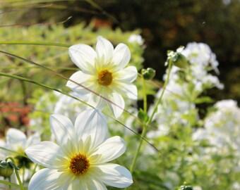Digital white flower print