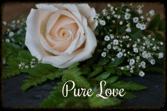 rose indicates love purity - photo #14