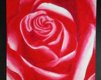 Pastel Red Rose