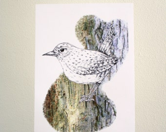 Print Winter Wren