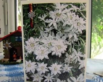 Edelweiss Charm Cards, Pkg.3