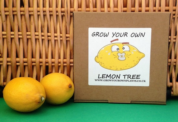 Grow your own lemon tree plant kit from seed by for Can i grow a lemon tree from lemon seeds