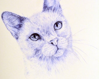 Cat Original blue ballpoint pen drawing A4