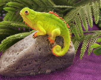 Miniature Chameleon on a Rock