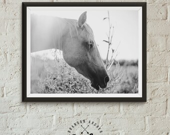Palomino Mare, Horse Print, Black and White Photography, Horse Photo Wall Art, Horse in Field, Colorado Horse, Print, Equestrian Art