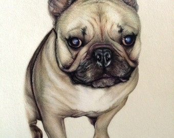 Custom Colored Pencil Pet Drawing