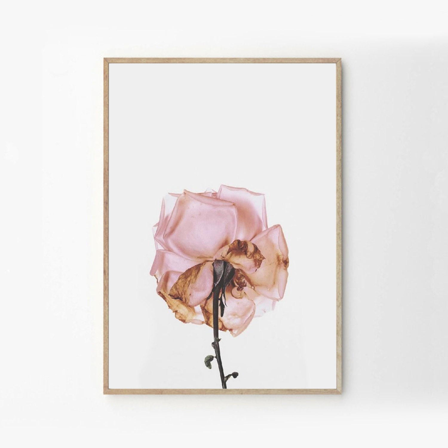 Pretty As A Picture - Floral Photography - Nature Photography - Botnical - Art & Collectibles - Digital Prints - Pink - Rose Print - Peach