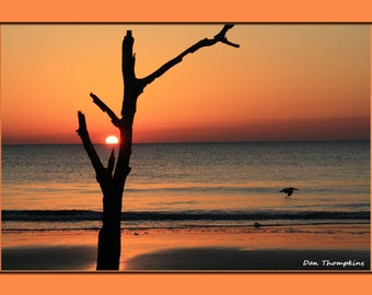 Beaufort, South Carolina, Sunrise, One Tree, Hunting Island Beaach, South Carolina