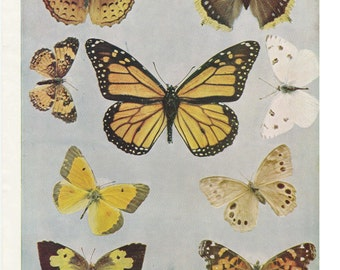 Vintage Butterfly Print Antique