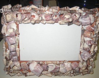 Barnacles/Augers Picture Frame, Beach Decor Seashell Frame