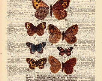 Victorian Butterfly | BUTTERFLIES Nature Plate -- Butterfly Art Print | Dictionary Print  3072V
