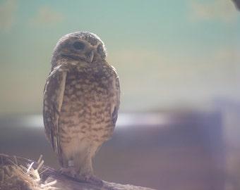 Adorable Owl Pastel Soft Portrait Photo