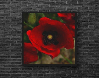 Poppy Flower Photo - Red Poppy Photo - Red Flower - Botanical - Paper Photo Print - Square Photo - Flowers Wall Art - Flowers Wall Decor