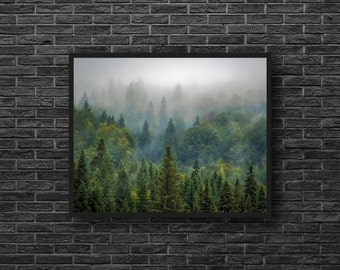 Forest Photo - Forest Landscape Photo - Misty Forest - Evergreen Photo - Shadows of Green - Forest Print - Forest Wall Decor - Home Decor