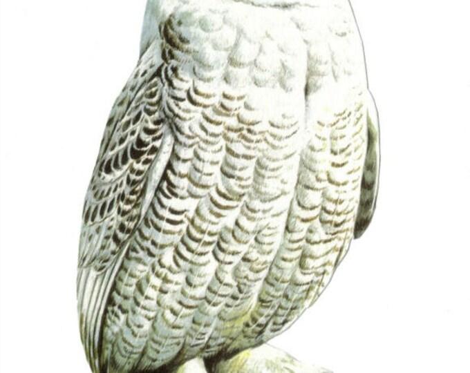 Odd Animal Artwork, Weird Oddity Art, Strange Owl Collage