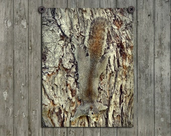 Hidden Squirrel Photograph, Nature Art, Animal Wall Decor, Woodland, Rodent, Tree Bark Print, Whimsical Picture - The Camouflage Of Nature