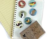 Wild Bird Magnets--Woodland Birds--Set of 6