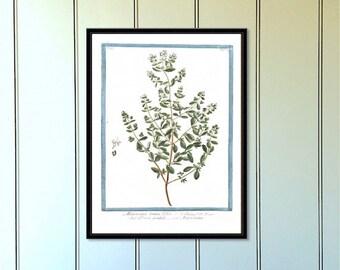 Marjoram herb reproduction antique botanical print botanical art botanical print botanical art botanical illustration botanical print set