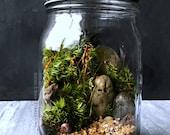 SALE Ready Made Woodland Terrarium in Glass Mason Jar