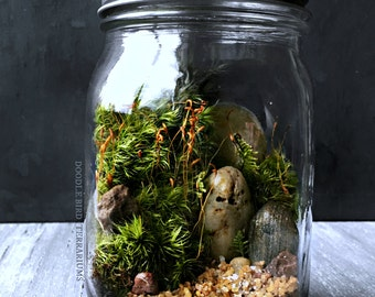 Ready Made Woodland Terrarium in Glass Mason Jar