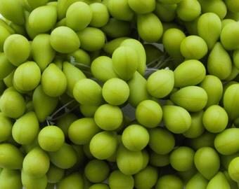9x6mm Matte Opaque Avocado Green Czech Glass Teardrop Beads - Qty 25 (BS299)