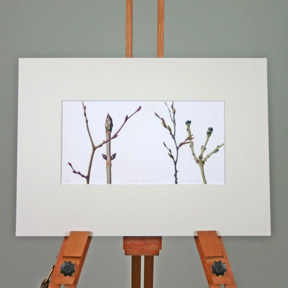 Botanical Illustration-Winter branches-chestnut,elm,beech and ash twigs-gift for dad-gift for nature lover-art for office-print for study