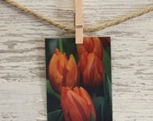 Orange and red tulip  refrigerator photo magnet, 1 magnet, spring tulips photo magnet, nature photography, kitchen decor, stocking stuffer