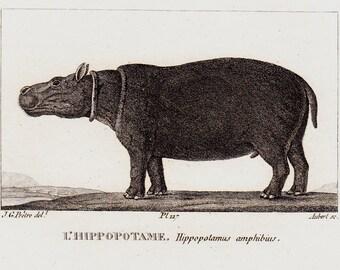 1826 Antique print of Hippopotamus, hippo, Original antique 190 years old engraving