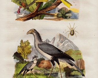 1838 Antique print of birds, countryside flora and fauna, secretary bird and canary, original antique 179 years old