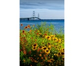 Blooming Flowers by the Bridge at the Straits of Mackinac in the Michigan Upper Peninsula No.0673 A Fine Art Landscape Photograph
