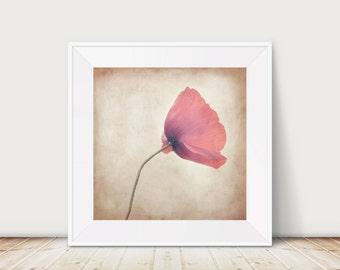 Stormbound - Fine Art Print Poppy Flower Texture Nostalgia Floral Botany