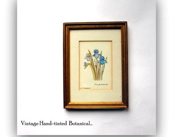 Vintage -Hand Painted- Original Artist Signed Botanical Engraved Print-Cottage Wall Art