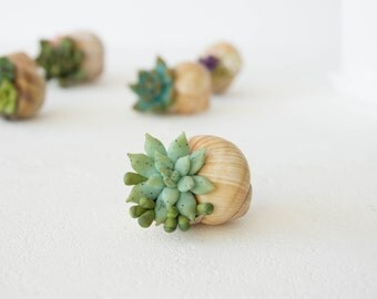 Green Blue Succulent Snail Shell Wholesale Home House Table Decor Decoration Accessory Wedding Favors Housewarming Christmas Xmas Santa Gift