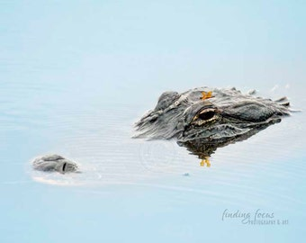 Alligator Photo, Gator Lake Florida Photography, Animal Swimming Underwater, Park Preserve Nature Print, FL Gator Wall Decor, Crocodile Art