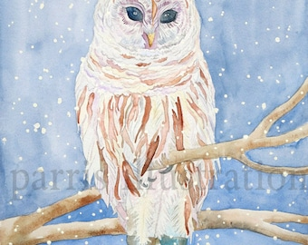 Barred Owl No.1, Archival Print, you choose size