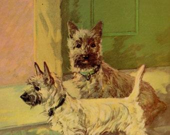 Antique CAIRN TERRIER Dog Print Twin Cairn Terrier Art Print Gallery Wall 1930s Print 2105