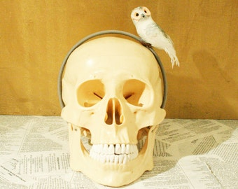 Whimsical Grey & White Feather Owl Bird Headband Hair Accessory