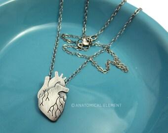 Itty-Bitty Body Parts - Anatomical Heart!