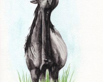 "ORIGINAL: Chincoteague Pony Stallion Black Tie Affair (""Ace"") Watercolor"