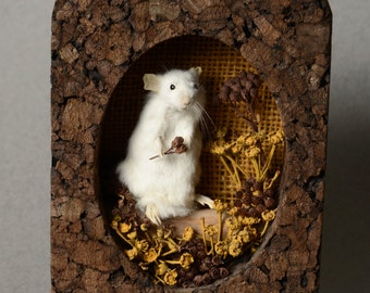 Taxidermy Mouse in Handmade Diorama