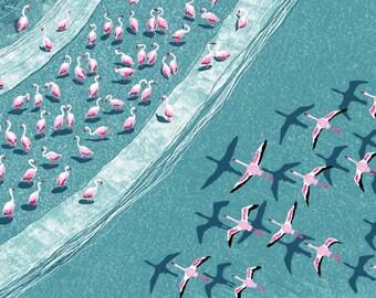 Migration of the Carmargue Flamingos