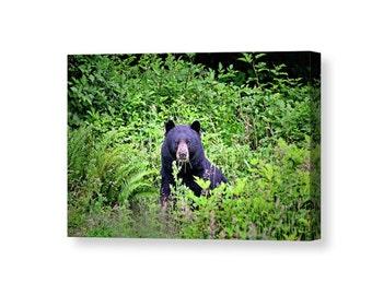 Bear Canvas, Bear Wall Art, Animal Canvas, Nature Wall Art, Bear Photograph, Bear Art, Wildlife Photography, Black Bear, Woodland Animals